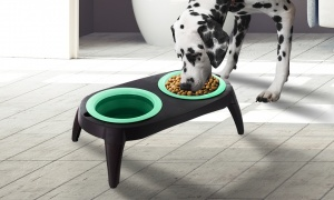 Crufts Travel Feeding Station