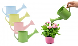 Small Watercan Planter With Hang Tag 4 Assorted Colors