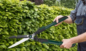 Telescopic Extending Garden Shears